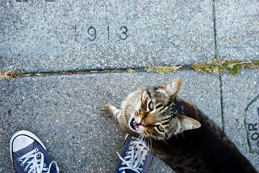 Sidewalk Stamp, Chucks and Cat