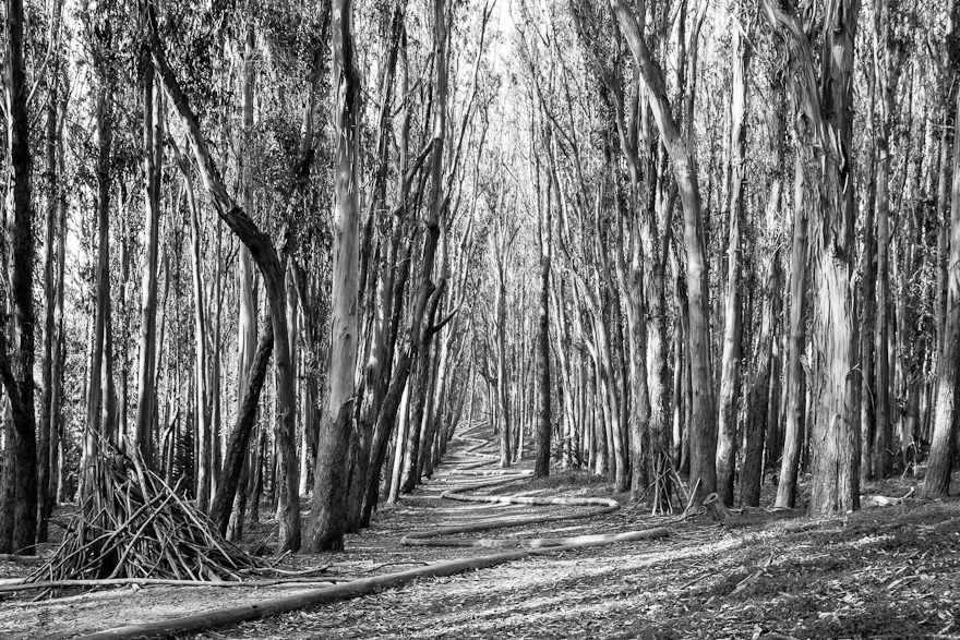 Wood Line: First Encounter #1 (Monochrome)